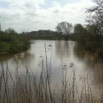 pond-one